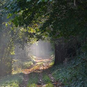 A walk in nature by Els He - Nature Up Close Trees & Bushes ( zuidlimburg, limburg, natuurpunt, belgium, hoeselt,  )