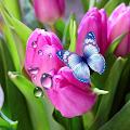 Tulips Live Wallpaper APK