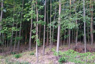 Photo: Junger Wald