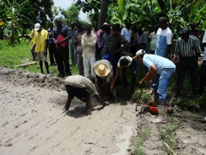 Photo: Training by Joeli Barison (on the right) of SRI transplanting in Les Cayes, June 2010 [Photo provided by Joeli Barison]