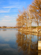 Photo: Afternoon sunlight on trees reflected in a lake at Eastwood Park in Dayton, Ohio.