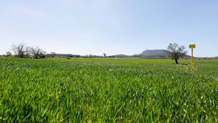 SOSTENIBILIDAD Redexis trabaja por un aire más limpio en la provincia gracias al gas natural.