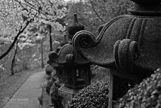Photo: Lanterns along a path up to a local shrine in Okayama prefecture, Japan.