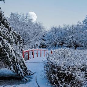 Japanese Garden. by Jim Dawson - Novices Only Landscapes ( moon. snow. march. japanese garden. fresh. cold. bridge. alone. )