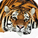 Tiger Pack 2 Live Wallpaper icon