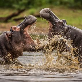 by Anton La Grange - Animals Other Mammals