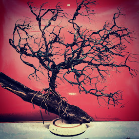 Arbutus by Brian Boyer - Artistic Objects Other Objects ( tree, recycle, wire tree )