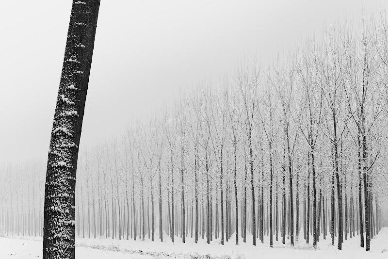 La prima neve di Francescogiacomo