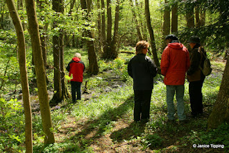 Photo: During the Spring Flower Walk we admired the bluebells and marsh marigolds that brighten the banks of the stream