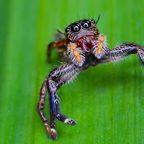 by Ahmad Zaini - Animals Insects & Spiders ( pwcinsectsandspiders )