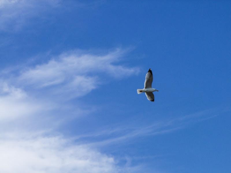 Sulle ali del vento di Giò Volpi