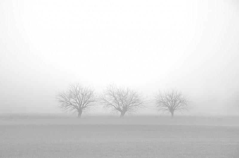WHITE AROUND di Alessandro Olioso ©