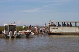 Photo: Bull Island Ferry assisted