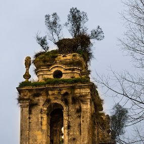 Mosteiro de Seiça by Edu Marques - Buildings & Architecture Decaying & Abandoned ( old house, old, tower, ancient, ruins, old building )