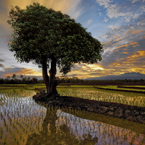 Tree and Dusk by Alamsyah Rauf - Landscapes Prairies, Meadows & Fields ( landscape )
