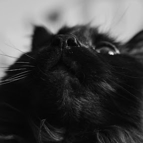 Look up by Donna Lane - Animals - Cats Portraits ( cats, cat, fluffy, pet, feline, portrait,  )