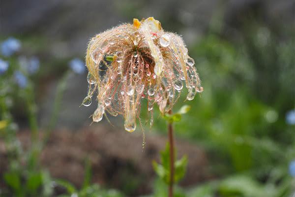 Perle di pioggia. di brunosma