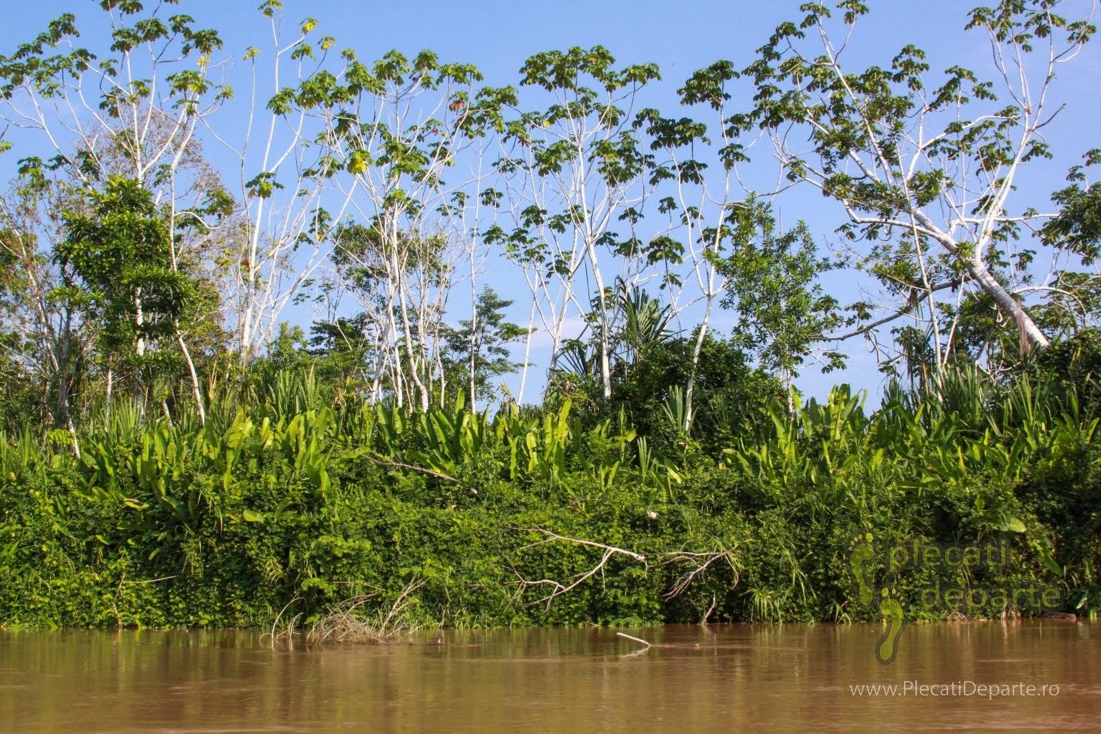Vegetatie amazoniana, pe malurile raului Huallaga, afluent al fluviului Amazonian,  in Peru