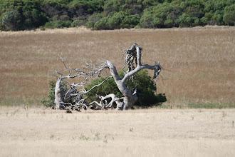 Photo: Liegender Baum