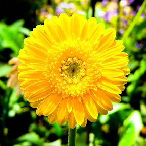 by Deepak Prabhu - Nature Up Close Flowers - 2011-2013