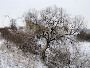 Photo: hidden  for #treetuesday // +Tree Tuesdaycurated by +Christina Lawrieand +Shannon S. Myers for #fotoamateur // +Fotoamateurby +Britta Rogge// +Karsten Meyer// +Scotti van Palm// +Markus Landsmann// +Remo Primatesta #tree // #winterwonderland