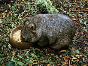 "Photo: 024-Marsupial au ""Featherdale Wildlife Park"""