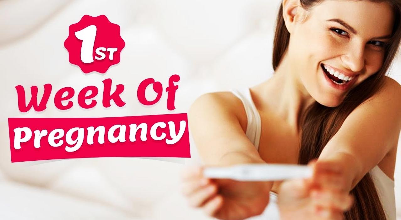 1st week of pregnancy