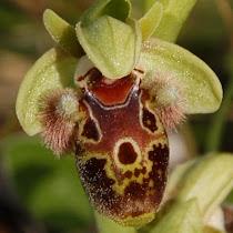 Biodiversity of Attica
