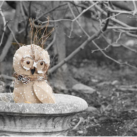 Owl  by Lorraine D.  Heaney - Artistic Objects Other Objects
