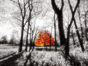 Photo: Last Autumn Tree. Eastwood Park in Dayton, Ohio.