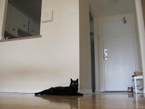 Photo: входная дверь, справа от входа- кухня и окошко (раздаточная) в обеденную зону, а посередине кошка;)