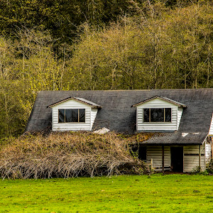 IMGL0387 edited,barn,white,shrubs,field,pasture,siding,abandon,building.jpg