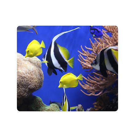 Musmatta Fellowes Under Sea