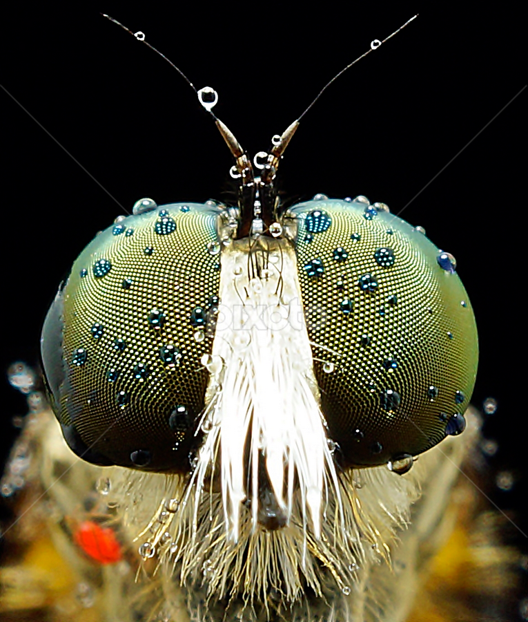 by Abgtamz Ally - Animals Insects & Spiders