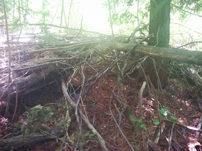 Photo: Even though this is a nicely stacked pile of kindling, because it is under the redwoods, the wood is soggy