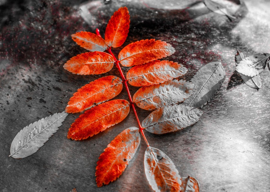 Fading Into Winter by Patricia Phillips - Artistic Objects Other Objects ( artistic leaves autumn )