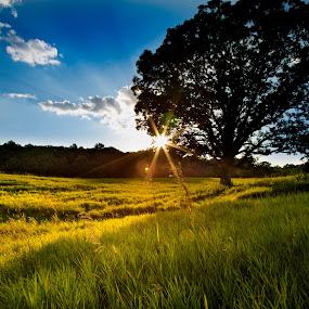 Here Forever by Chris Martin - Landscapes Sunsets & Sunrises ( clouds, field, sunburst, blue sky, tree, sunsets, sunset, meadow, summer, sunshine, meadows, sunrise, summertime, sunlight,  )