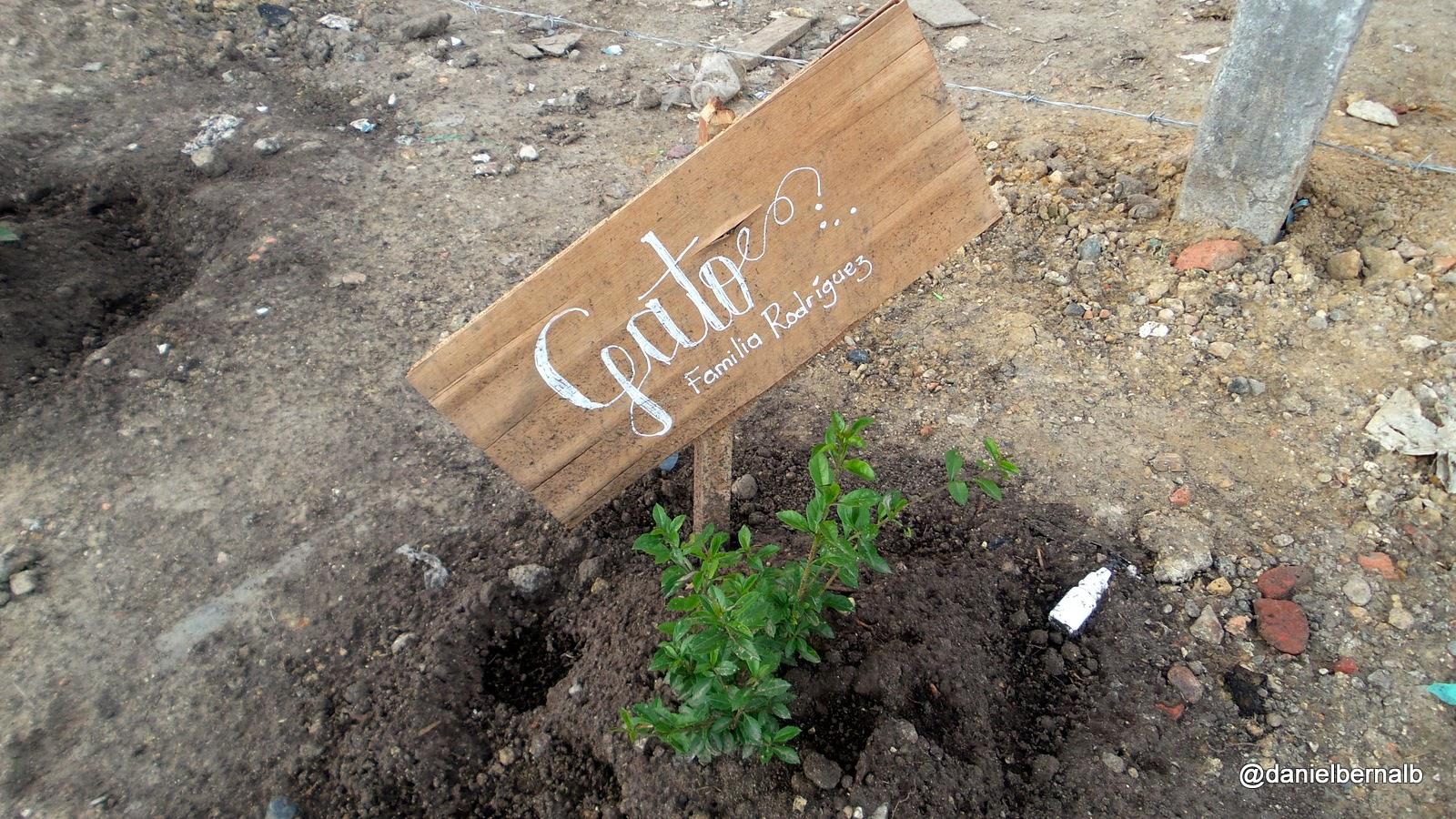 Árboles símbolo de apropiación ciudadana