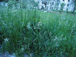 Photo: prosperous weeds in garden of QRRS Dorms. 中国北车齐车公司公寓花园一角茂盛的草地。
