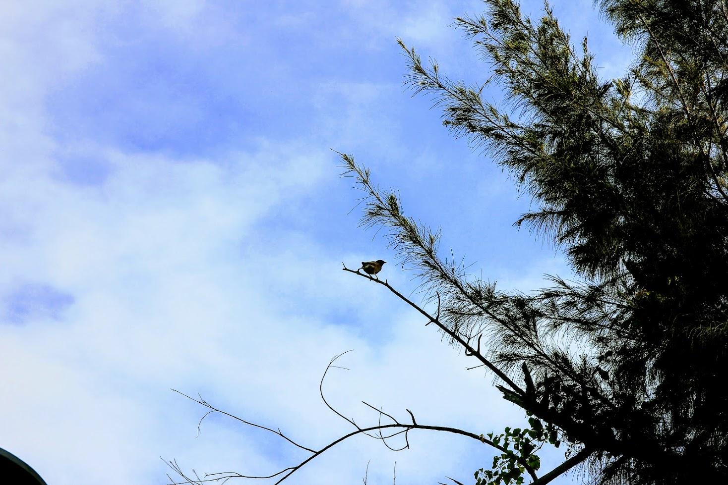 從進門口就發現這邊的鳥類很多,只要靜下來就可以看到