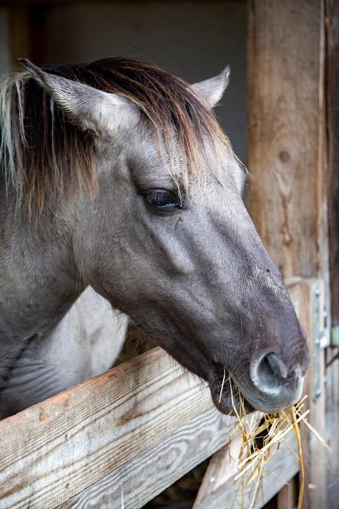 Siedlisko Leluja, koń