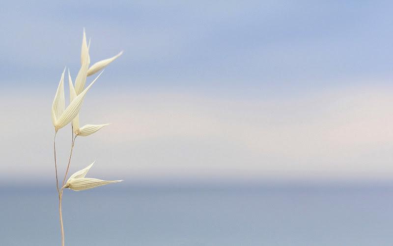 delicate. di Naldina Fornasari