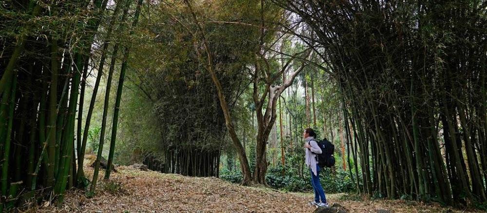 chikmagalur-places-to-visit-near-bangalore_image