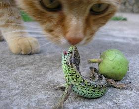 Photo: http://agnesobrazkov.webnode.cz/ Krokodýl nebo ještěrka??