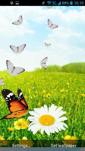 春天的蝴蝶動態壁紙
