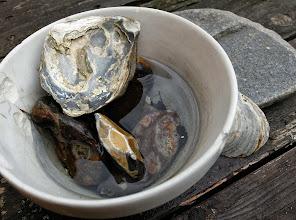 Photo: Sten, østers- og muslingeskaller på havebordet
