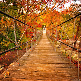 Autumn in Rock City by Abet Rhupert - Landscapes Forests ( hanging bridge, autumn bloom, autumn rocktober, pwcautumn, autumn tours )
