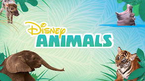 Disney Animals thumbnail