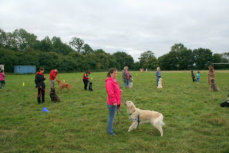 Photo: Claire and Oscar Golden and in the background Jo with Fate Lab, Dale with Zac Setter X, Claire with Merlin, Sarah with Lotti Spinone, Nina with Hamish Golden, Lily and Holly, Kerry with Brian Labradoodle