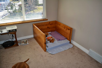 Photo: Moved the big whelping box into dinning room, this one will become the night time room. There will be an ex pen around giving her a sleeping area and potty area.